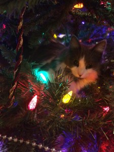 kitty in a christmas tree