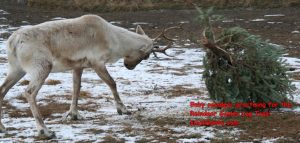This was from the reindeer Christmas tree log toss. This year we have new games!